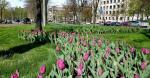 В Харькове впервые за много лет высадили тюльпаны