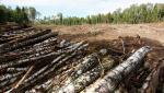 Депутаты облсовета обратятся к правительству, чтобы остановить незаконную вырубку леса
